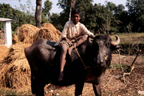 The Indian caste system has been in use for many years
